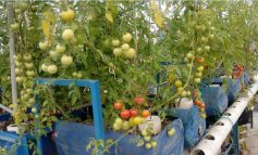 We give technical support on Aquaponics