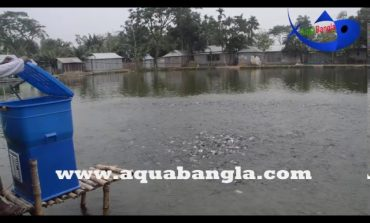 Automatic Fish Feeder| E-Fish Feeder| Smart Fish Feeder|E-fishery first time use in Bangladesh