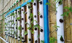 We give technical support on Hydroponics